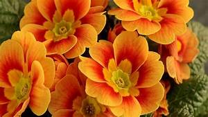 Stunning Orange Flowers - YouTube