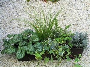 Winterpflanzen Für Balkonkästen : bepflanzter balkonkasten 60 cm wintergr n dieses und jenes balkon garten und balkon pflanzen ~ Indierocktalk.com Haus und Dekorationen