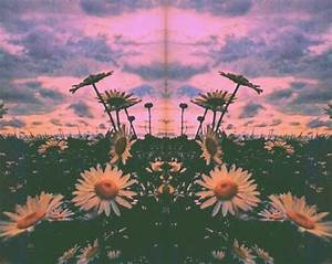 Trippy // nature | A Total Mind Fuck | Pinterest | Sun ...