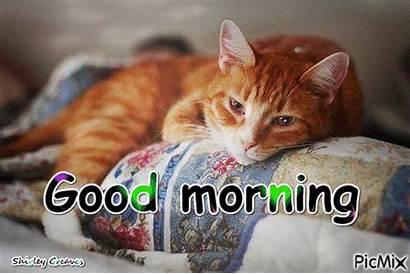 Morning Sleepy Cat