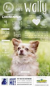 dog adoption flyer template - wally poster 600 1 043 pixels typography