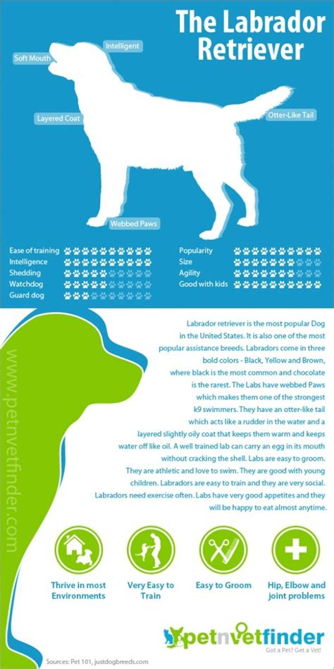 pet graphics images  pinterest pets info