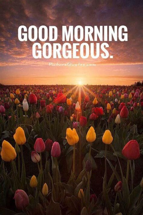 Good Morning Gorgeous Quote Pictures, Photos, And Images