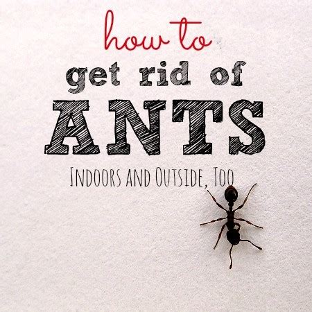how to get rid of ants in your home how to get rid of ants and keep them away for good