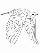 Bluebird Coloring Pages Eastern Fearless Drawing Birds Bird Printable Print Drawings Designlooter Recommended Getdrawings Popular 38kb 860px sketch template