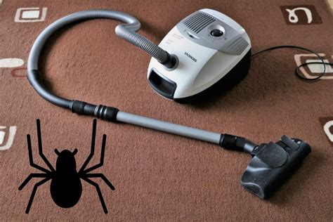 Spinnen Im Staubsauger Ueberleben Oder Sterben by 220 Berleben Spinnen Im Staubsaugerbeutel Wenn Du Sie Aufsaugst