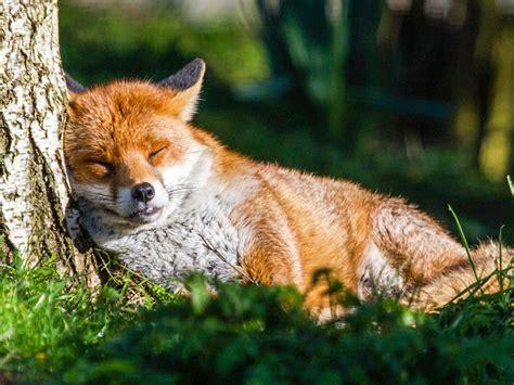 fotos de animales tomadas en jardines soyactitud