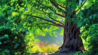 Beautiful Nature Image...