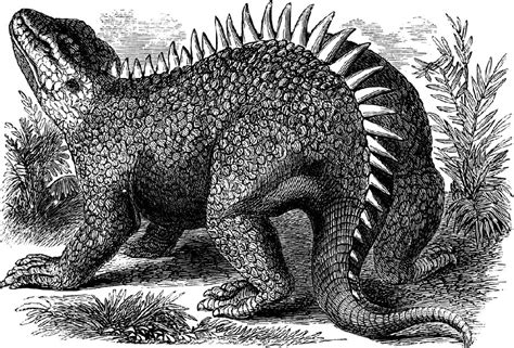 hylaeosaurus pictures facts dinosaur