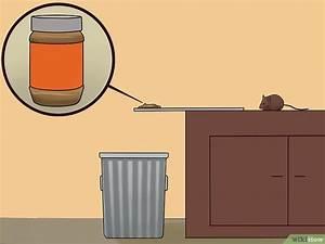 Comment Attraper Une Souris : comment attraper une souris sans la tuer 10 tapes ~ Dailycaller-alerts.com Idées de Décoration