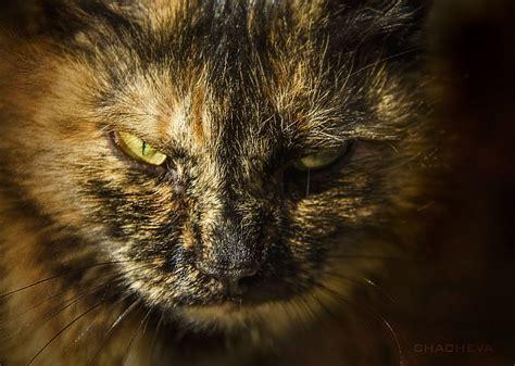 fierce cat animals