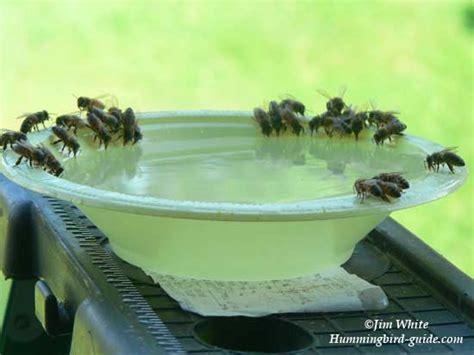hummingbird feeder bees   solve  problem