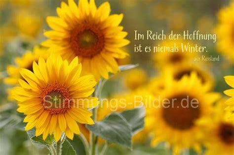 im reich der hoffnung sonnenblumen www stimmungs
