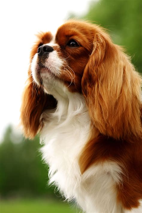 qu 233 perro deber 237 as tener de acuerdo a tu signo zodiacal