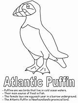 Puffin Coloring Newfoundland Pages Drawing Bird Atlantic Printable Birds Canadian Canada Line Flag Realistic Map Template Worksheets Getdrawings Geography Drawings sketch template