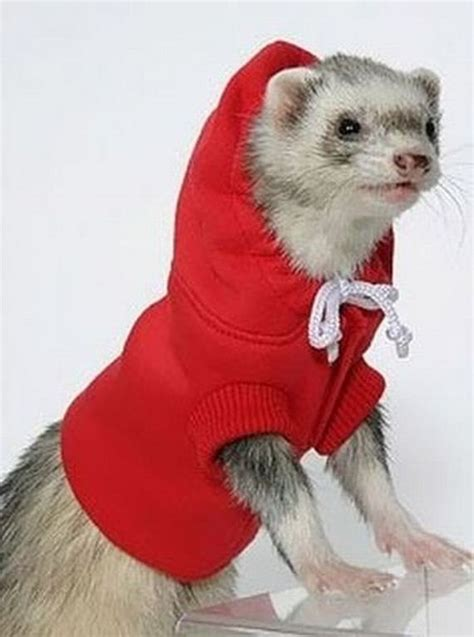 ferret sweaters sweater ferrets xcitefun