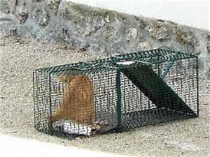 Trappe Pour Chat : capture chats errants sauvage vet at home ~ Dode.kayakingforconservation.com Idées de Décoration