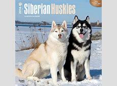 Kalender 2018 Siberian husky EuroPostersse