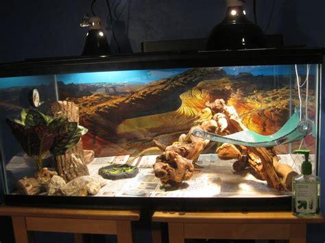 lighting for bearded dragon vivarium 8 best reptile enclosures images on pinterest reptile