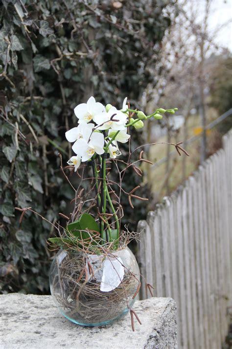 orchidee  glas einpflanzen diy orchideen im glas