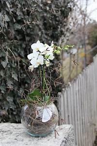Orchideen Im Glas : orchidee in glas einpflanzen diy orchideen im glas ~ A.2002-acura-tl-radio.info Haus und Dekorationen
