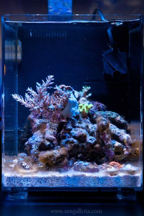 pico reef led lighting 268 best ideas about nano reef aquariums on pinterest