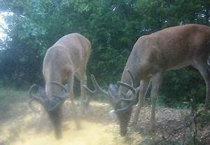 Agent offers more insight on deer feeding restrictions ...