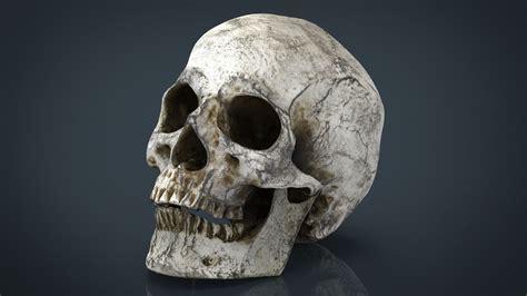 Free Photo Skull Head Scary Halloween Download