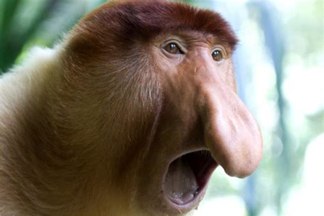 10 Ugliest Animals On The Planet