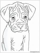 Boxer Puppy Pages Coloring Cute Heart Print Coloringpagesonly sketch template