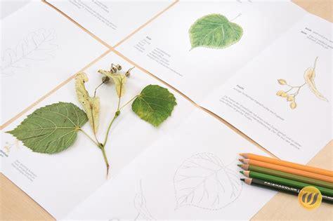 Wie nutze ich bewerbungsvorlagen richtig? Herbarium Deckblatt Vorlage Zum Ausdrucken