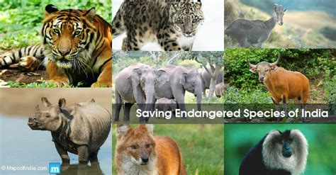 image  endangered animal species  india  india