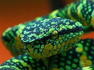 Image Gallery neon green snake
