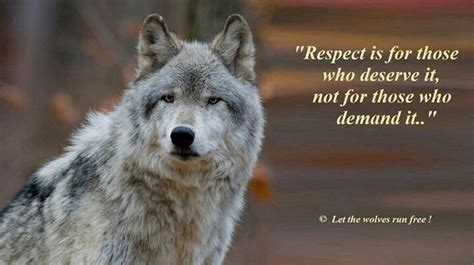 Respect Wolf Quotes Warrior Quotes Lone Wolf Quotes