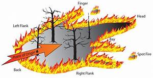 Forest-fire-diagram