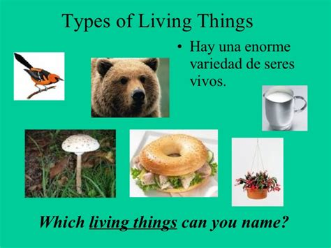 Living Thingsseres Vivos. Carole King Living Room Tour. Interior Design Living Rooms. Marble Living Room Table. Dining Room Chair Slipcovers White. Aarons Living Room Sets. Paint Colours For Dining Rooms. High Gloss Living Room Furniture. Cabinets For Living Room Wall
