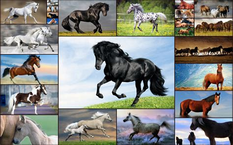horse games for preschoolers puzzles for free trial 990