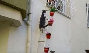 Gerichtsurteil Katzen Dürfen Nachbarn Nicht Belästigen : diese frau baute eine leiter zu ihrer wohnung der grund ~ Lizthompson.info Haus und Dekorationen