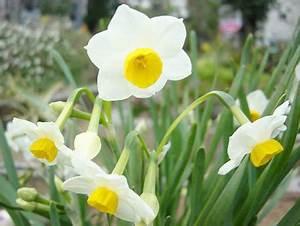 Feng Shui Garten Pflanzen : feng shui pflanzen f r den garten aequivalere ~ Bigdaddyawards.com Haus und Dekorationen