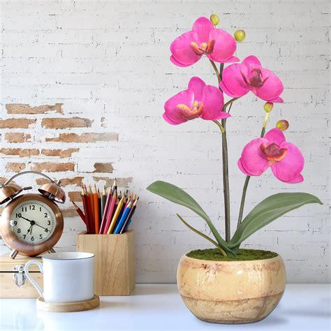 ดอกกล้วยไม้ phalaenopsis จัดในกระถางเซรามิค สวยคลาสสิค สำหรับประดับตกแต่งบ้านเพื่อความสวยงาม