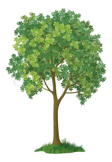 kastanienbaum stockfoto colourbox