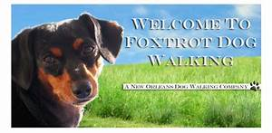 foxtrot dog walking new orleans With the dog walking company