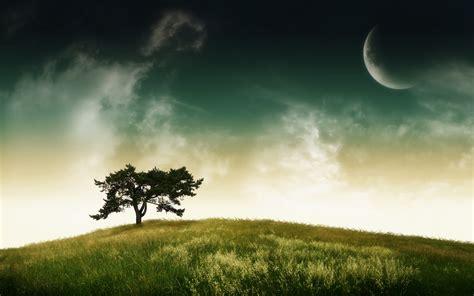 single desktop background tree wallpeprs nature wallper wallpapers zoo