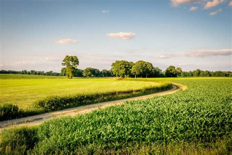 idyllic nature netherlands meadow stock  pictures
