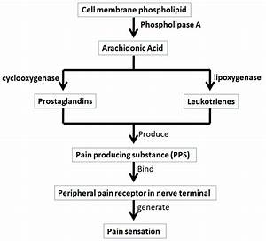 Physiology Of Pain Or Mechanism Of Pain