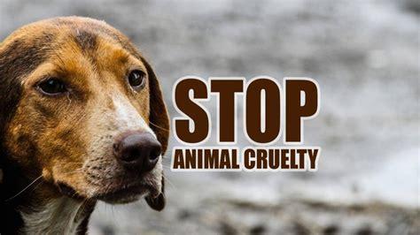 inhumanity  animal cruelty  india legal advice nri