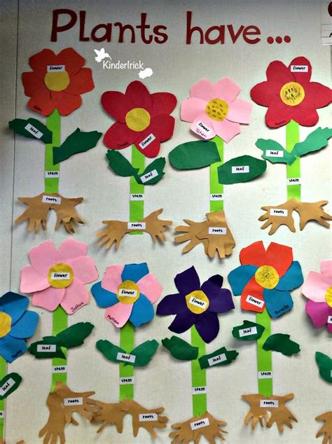 parts of a plant activity science ps