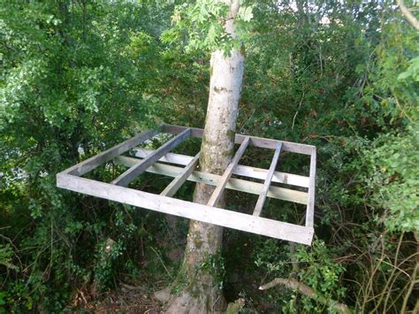Building Treehouse Pine Tree