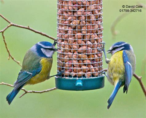 peanuts for birds birds peanuts twootz com