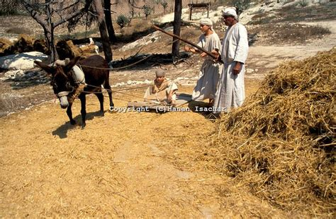 threshing floor bible meaning threshing floor araunah said why has my lord the king